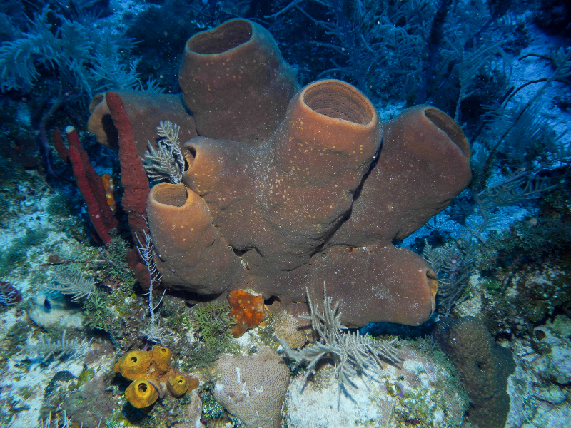 Brown Tube Sponge