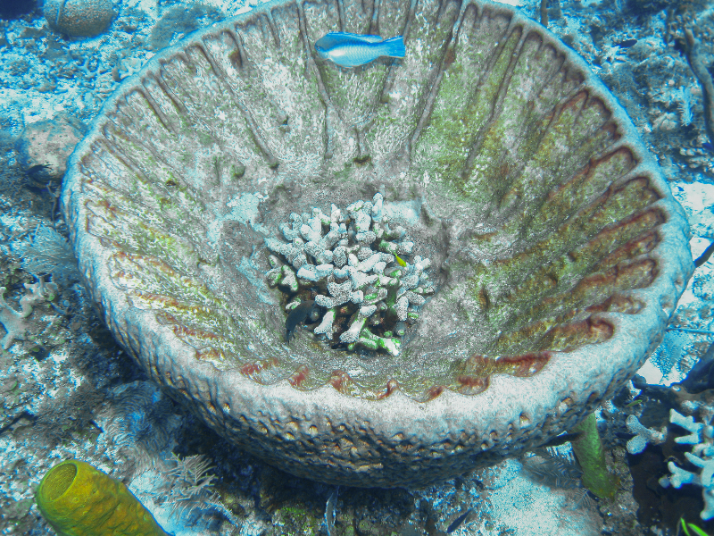 Leathery Barrel Sponge with Finger Coral and several types of fish.