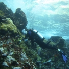A member of the Science team conducts a coral survey.