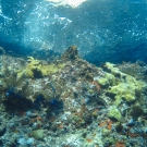 Several types of soft and hard corals dot this coralscape.