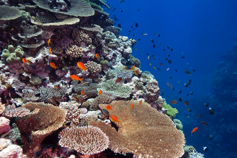 A beautiful coral reef in New Caledonia.