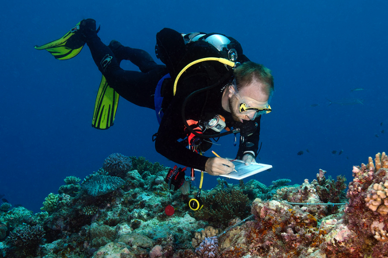 Scientist Gwilym Rowlands surveying corals.