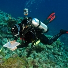 Scientist Dawn Bailey conducting coral surveys in New Caledonia.