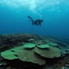 Fellow, Joao Monteiro, SCUBA diving at Pelotas Reef.