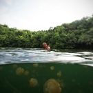 Tourists are allowed to snorkel in Jellyfish Lake, but no diving is allowed.