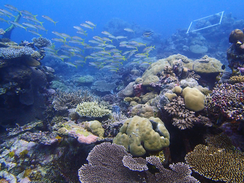 A lush reef, 8-12 m below the surface at the Western barrier reef of Palau.