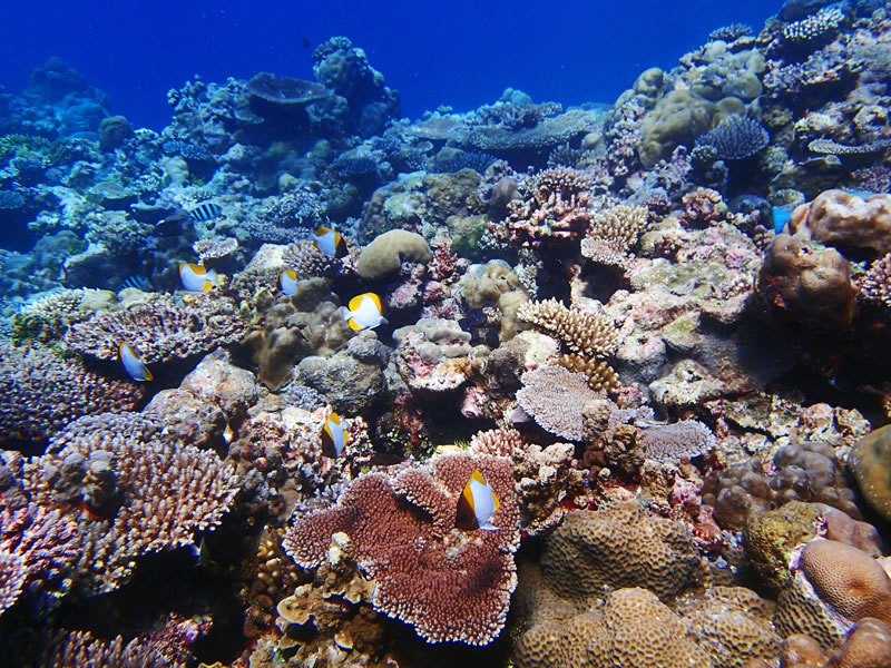 A vibrant, shallow-water coral reef in southern Palau.