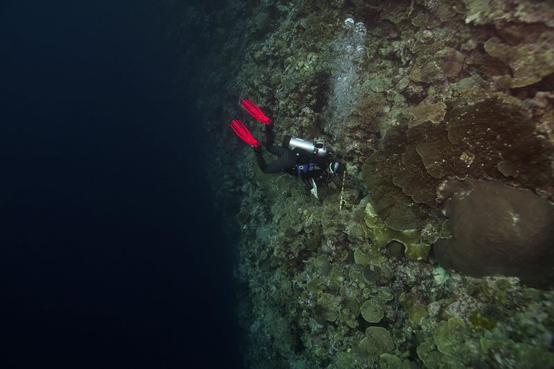 Samantha Clements performing benthic surveys on the edge of a wall.