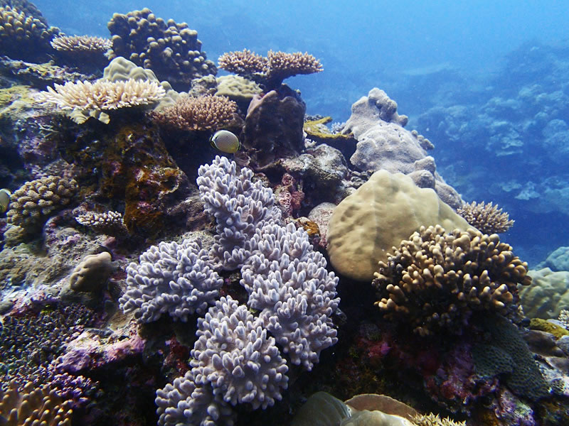 A mix of hard and soft corals on the western barrier forereef of Palau