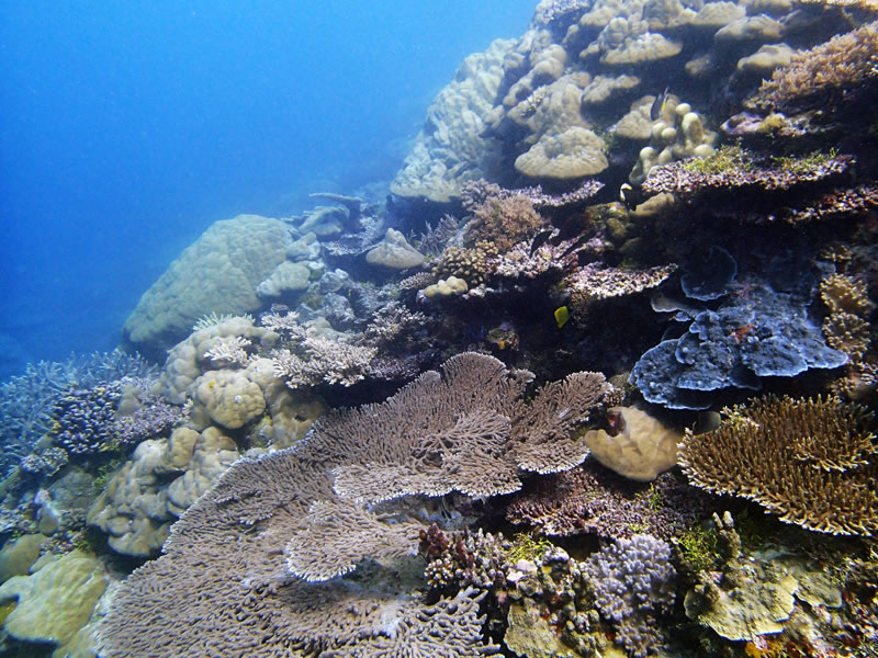 A hard coral-dominated community near Ulong Channel, Palau.