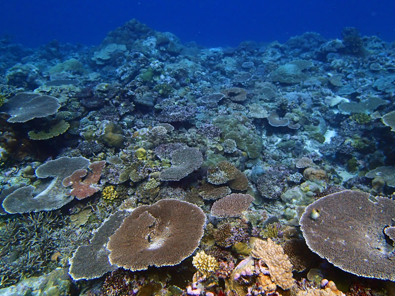 Palau\'s Western barrier reef