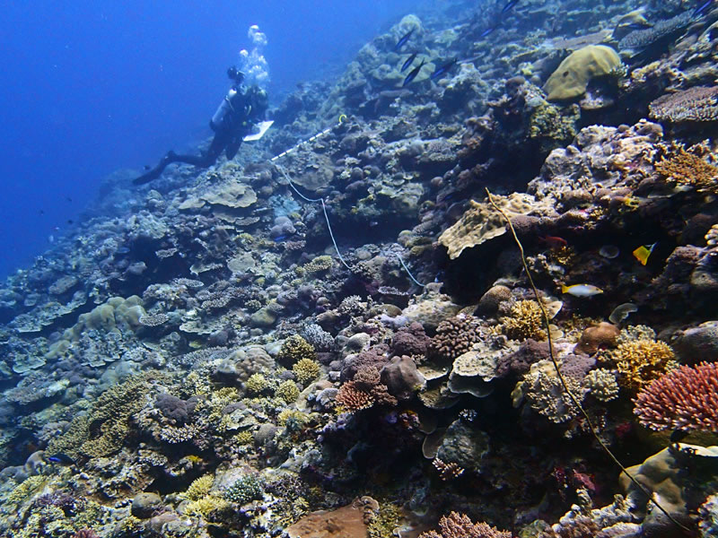 Grace Frank surveying a reef at Western barrier reef, Palau.