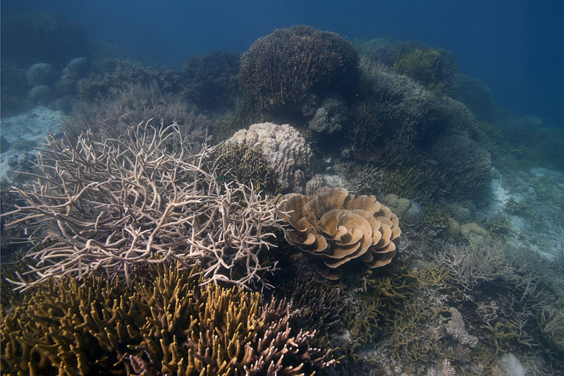 Shallow reef composed of thickets of brancing Acropora, digitate Porites, and leafy scrolls of Turbinaria corals.