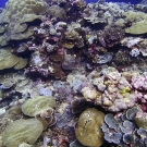 Peleliu, Palau: a coral lover's paradise.