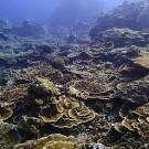 Peleliu, Palau: My favorite dive of the trip (as of Jan. 27, ~50 dives in).