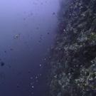 Palau's iconic