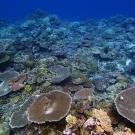 Palau's Western barrier reef