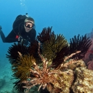 Graham Kolodziej mugs for a photo behind a cluster of feather stars.