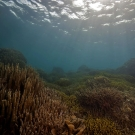 Waves of sunlight cast through the shallows of a reef covered in Porites and Acropora corals.