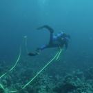 day-5_dive-3-dsc_0211