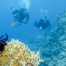 day-8_dive-3-dsc_0207