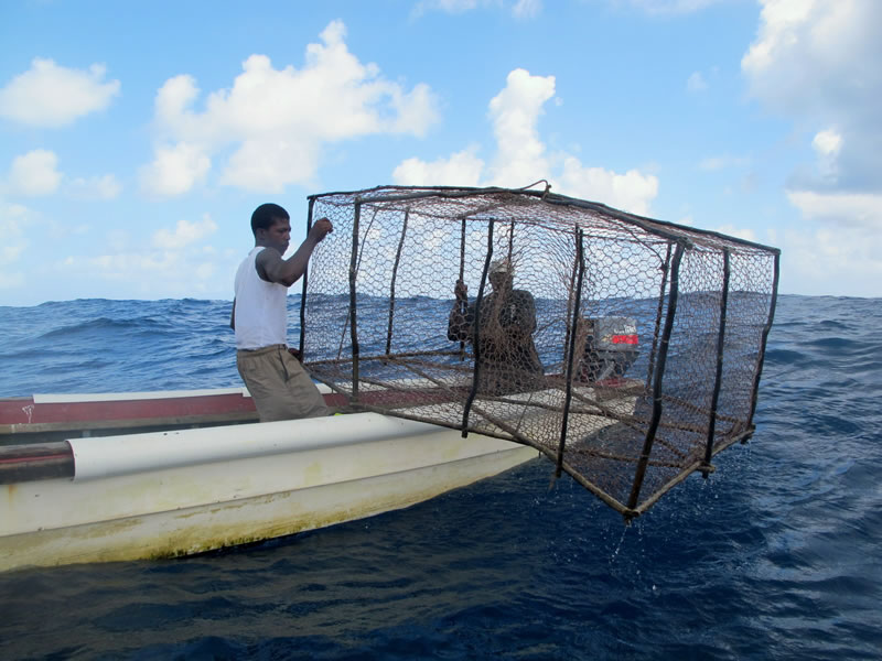 Living room designs - Jamaican Fishermen Release A Large Homemade Antillean Z Fish Trap Near