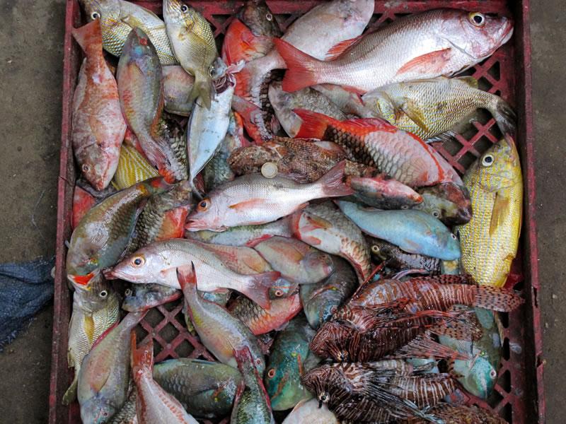 Restoring Jamaica S Pedro Banks Kslof Living Oceans