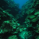Coral reefs of Jamaica's Pedro Bank are some of the healthiest reefs in the country, but few large fish remain.