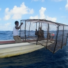 Jamaican fishermen release a large homemade Antillean Z  fish trap near a coral reef.