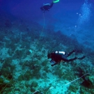 Divers on the Global Reef Expedition conducting a survey of commercially valuable lobsters and conch in Jamaica.