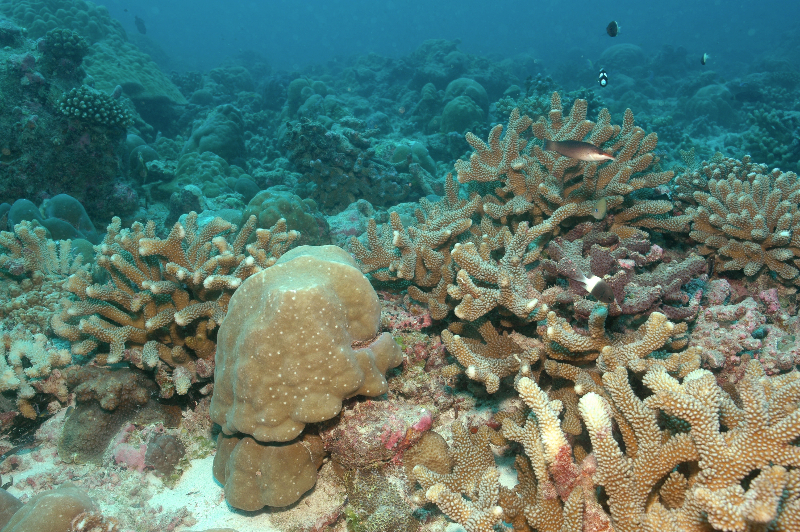 fore-reef-slope-with-coral_hagan