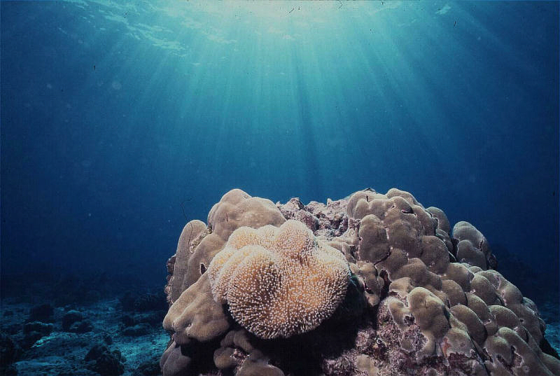 porites-and-soft-coral