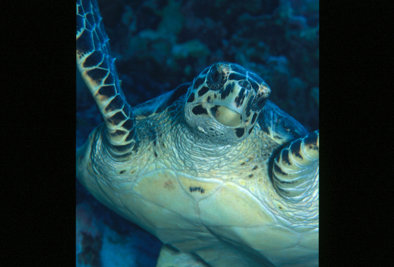 sey-turtle-3