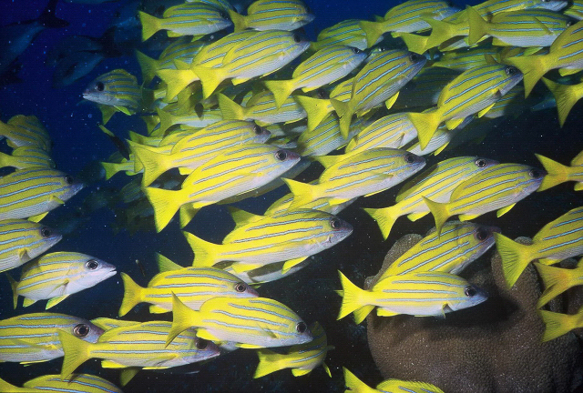 socio_fish-image