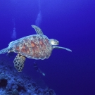 sey-turtle-2
