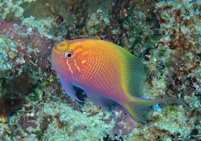 small reef fish images   living oceans foundationliving