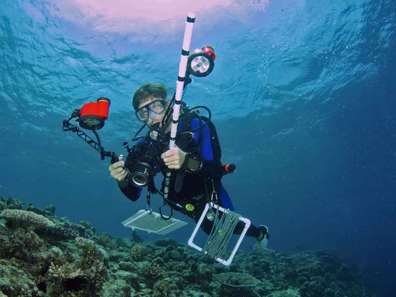 Chief Scientist, Andrew Bruckner, conducting coral surveys.