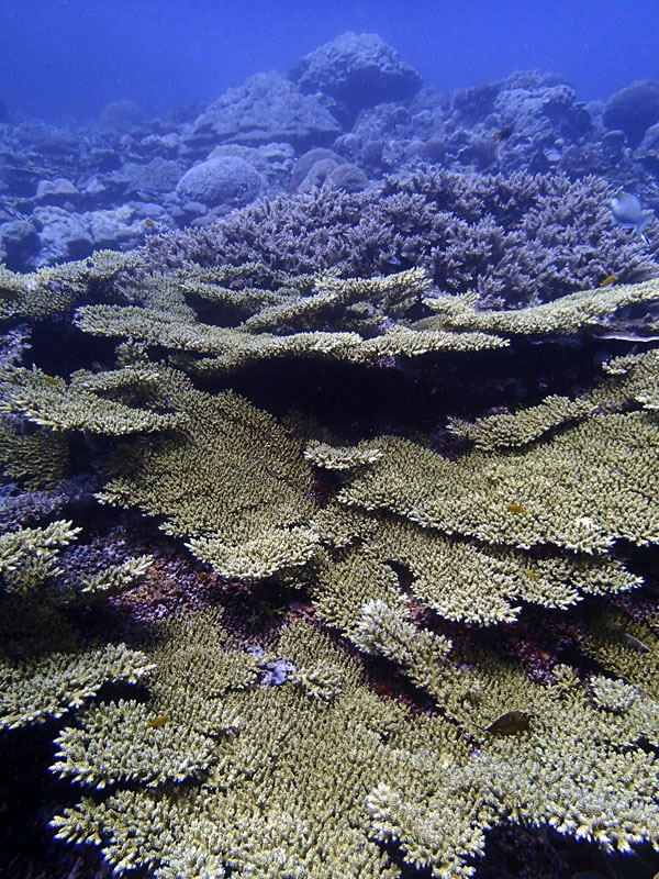 Beautiful reef in Marovo Lagoon.