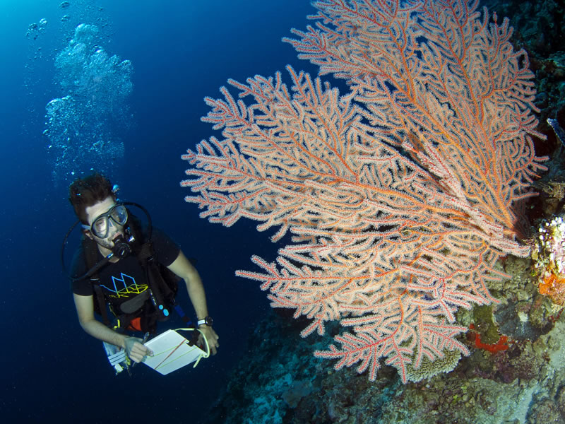 Fellow Anderson Mayfield checking out beautiful orange gorgonian.