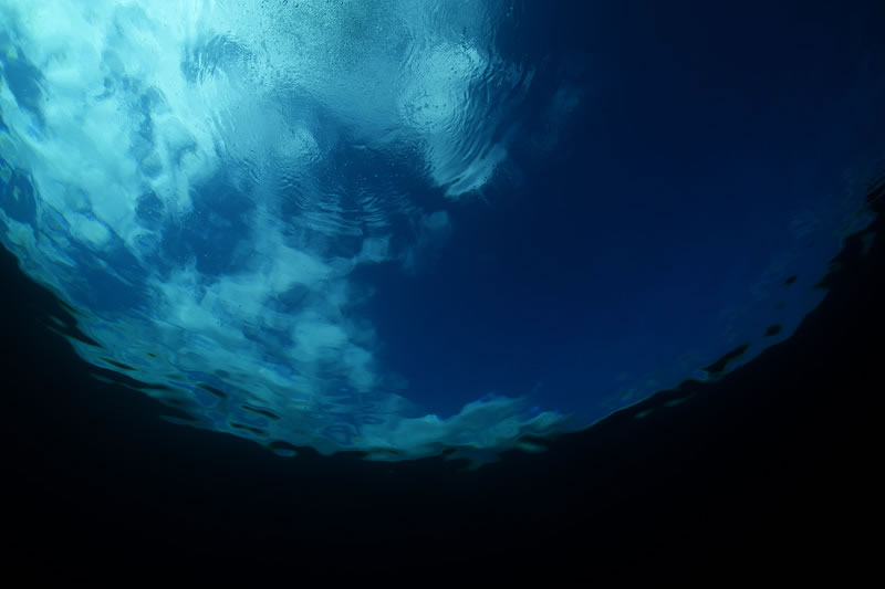 Looking up from the underwater world below.