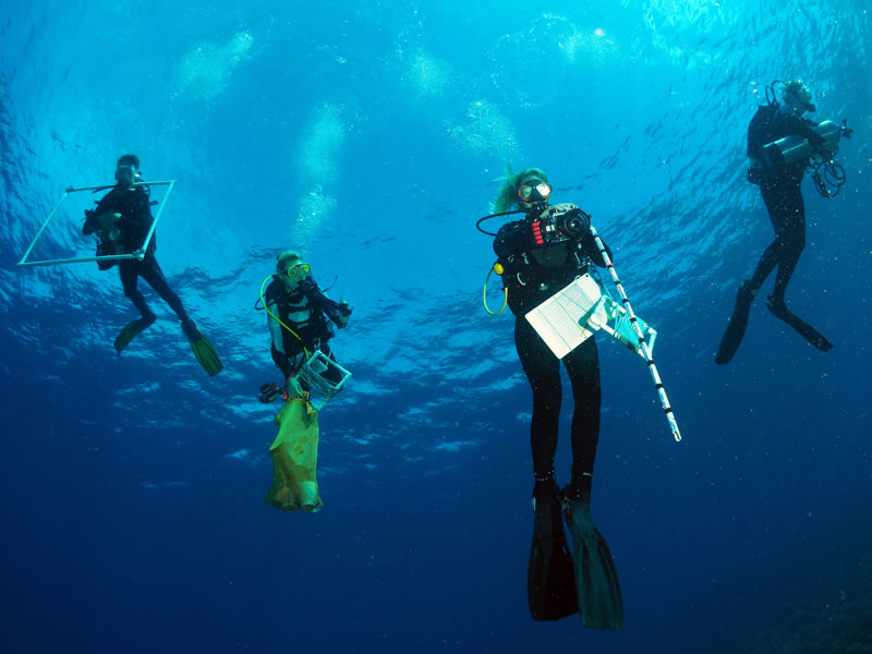 Scientists ascending from a scuba dive.