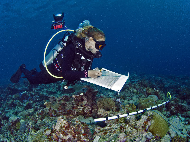 Grace Frank conducting coral survey.