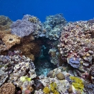 Colors of the reef.