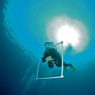 Ken Marks ascending from a dive after taking photo transects.