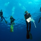 Scientists ascending from a scuba dive.