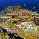 Porites lobata coral with many different species of fish.