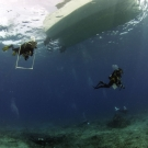 Scientists ascending from a dive.