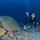 Chief Scientist Andrew Bruckner surveying corals.
