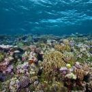 Coral reef at 2-4 meters depth.