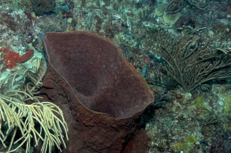 Brown Bowl Sponge